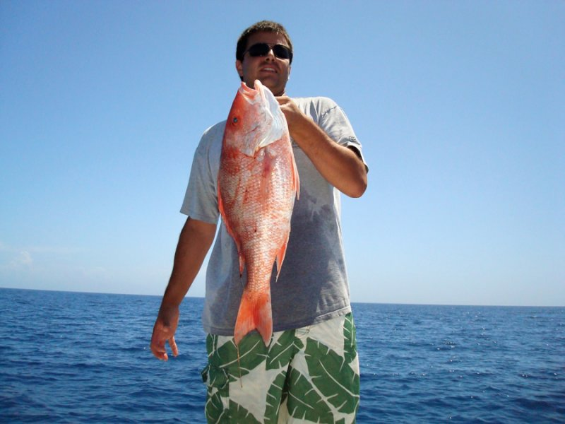 Gorgeous Red Snapper