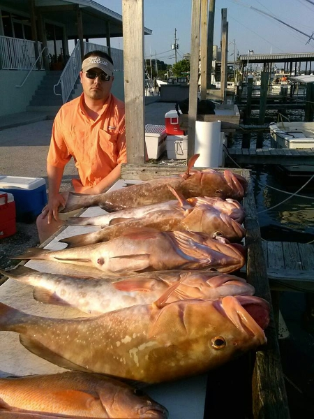 Nice haul of red snapper